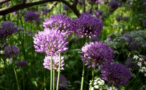 Inveresk Gardens, Scotland
